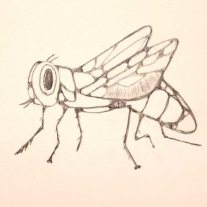 Ten-Minute-Sketch-Insect - Wendy Campbell